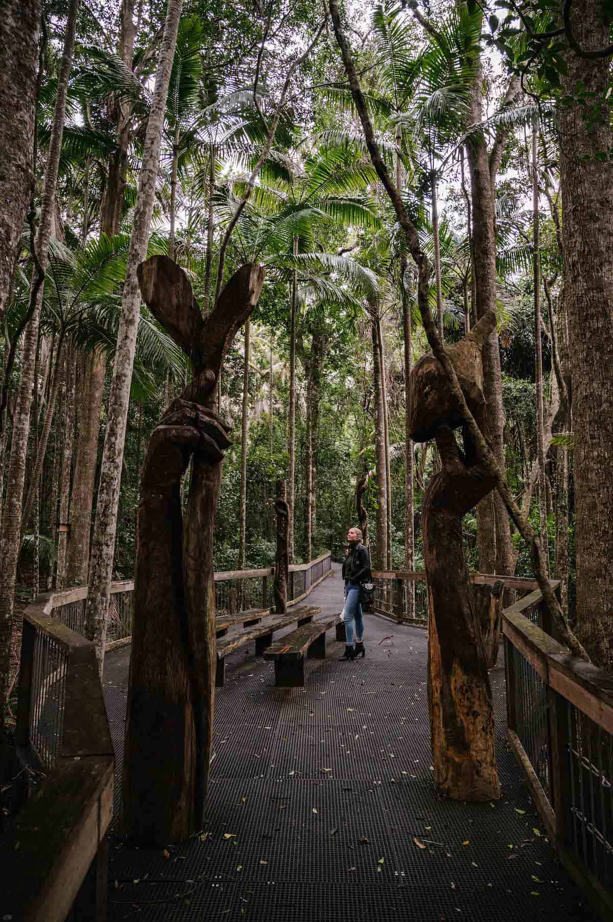 sea acres rainforest centre boardwalk port macquarie