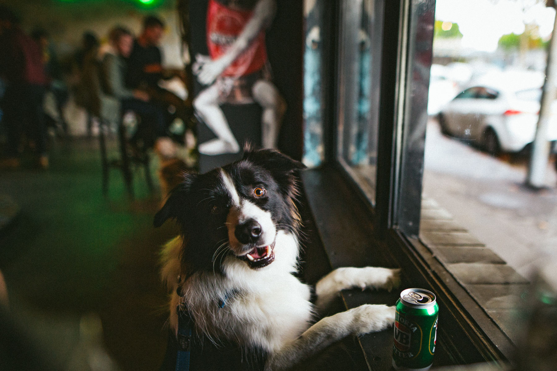 what to do in newcastle when it rains take the dog to the pub