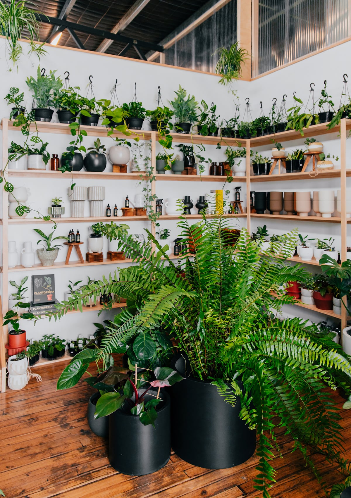 the green altar plant parlour parry st newcastle west nsw